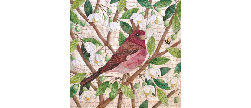 Naturalist's Notebook: The Purple Finch