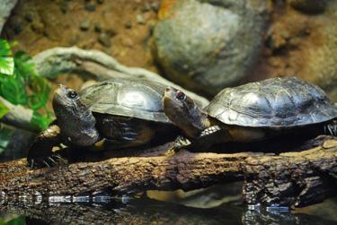 turtles_sm