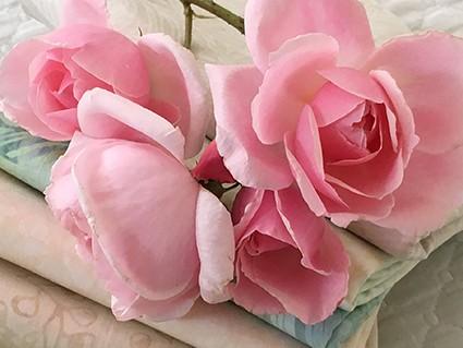 jenna_roses_detail_sm