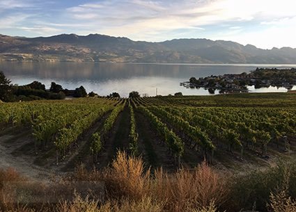 canada_vineyard_lake_view_sm